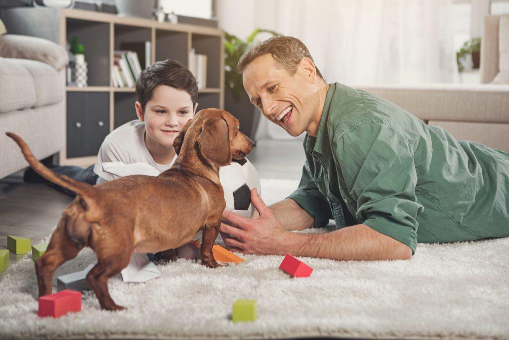 ¿Son buenos los cachorros Dachshund con los niños?