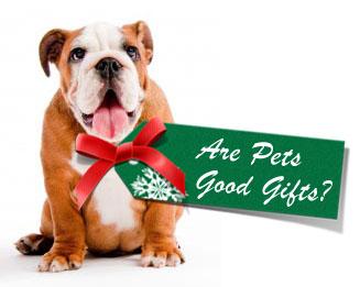 regalo mascota