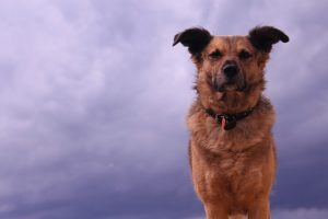 perro tormenta