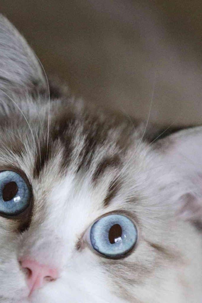 The Cat-Chasing Instinct